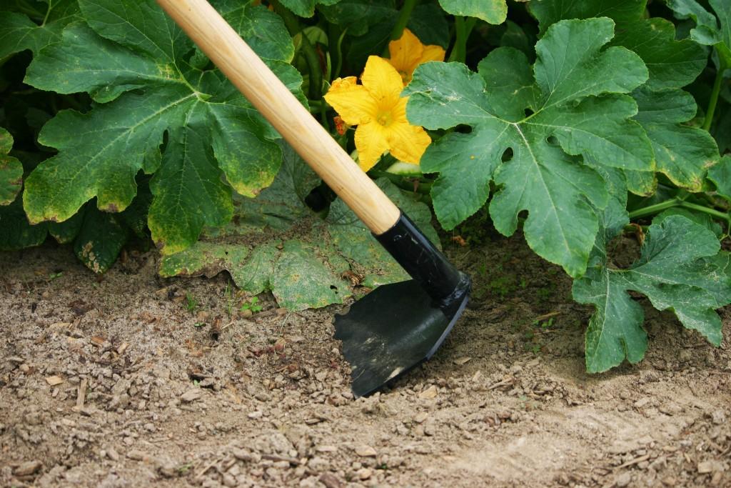 L'entretien d'un jardin par des professionnels